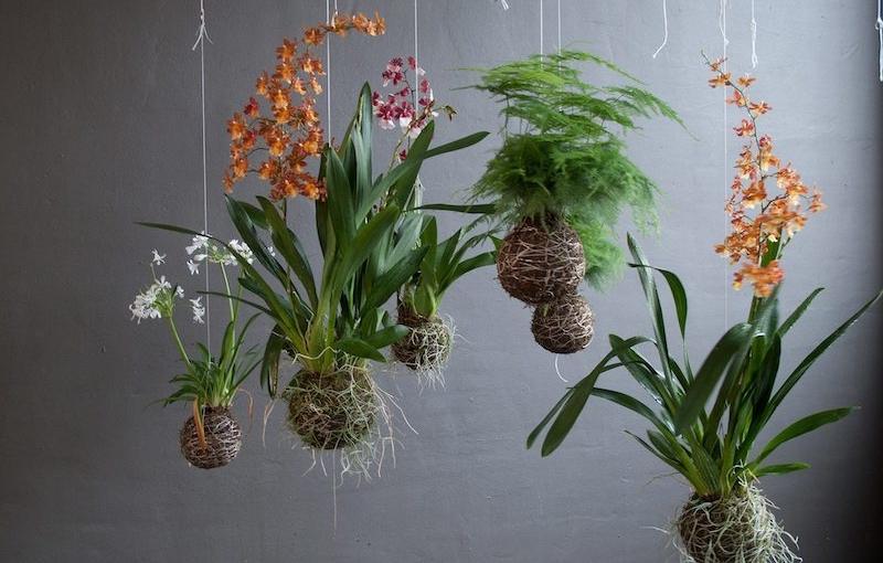 kokedama piante sospese
