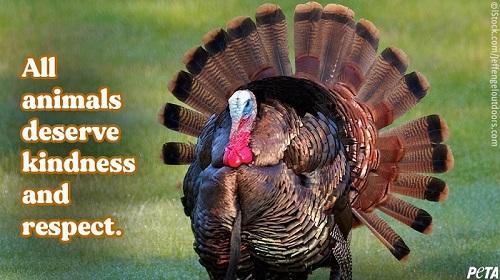 Giorno del Ringraziamento, la campagna PETA