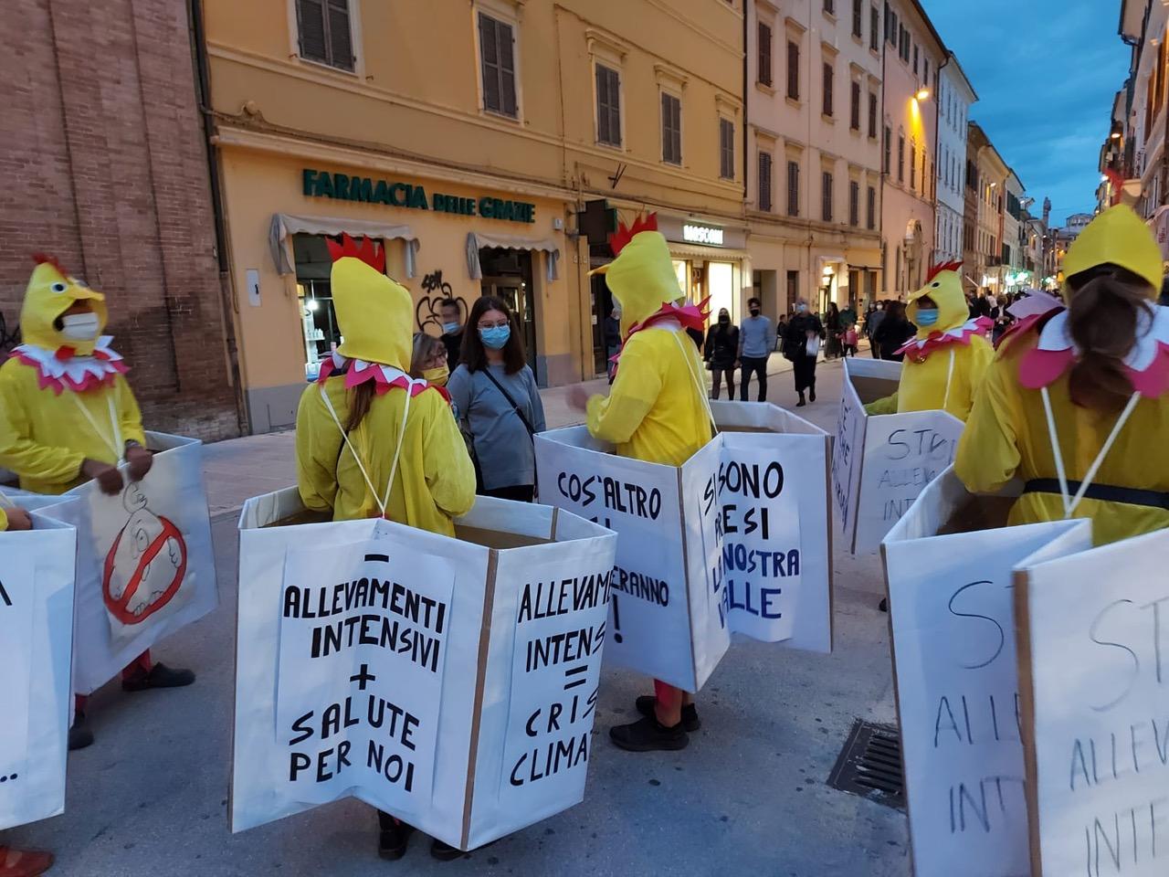 comitati contro allevamenti intensivi polli marche