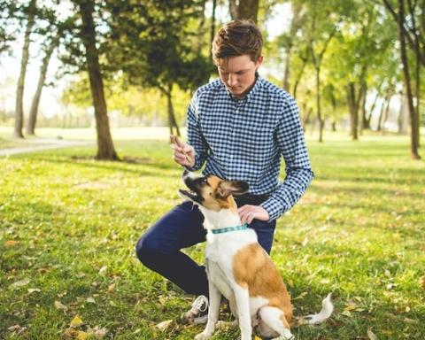 nuovo Dpcm e cura degli animali