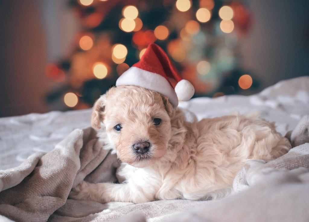 Oipa - Appello cuccioli a Natale