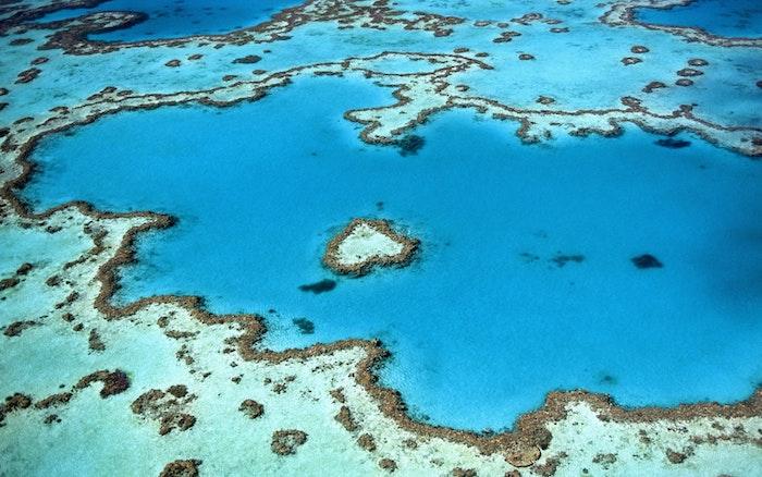 Fecondazione artificiale dei coralli | Grande barriera corallina
