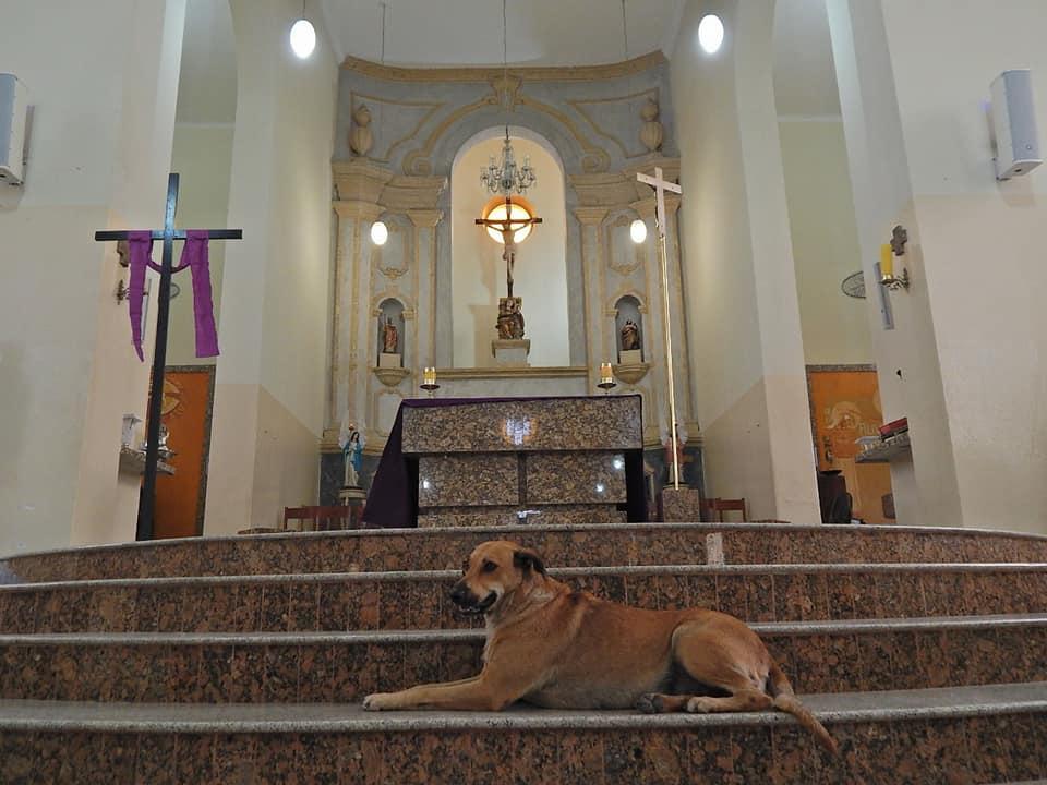 Joao Paulo Araujo e il cane sull'altare