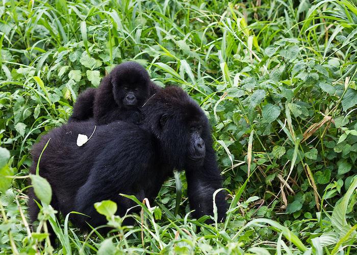 parco nazionale di Virunga