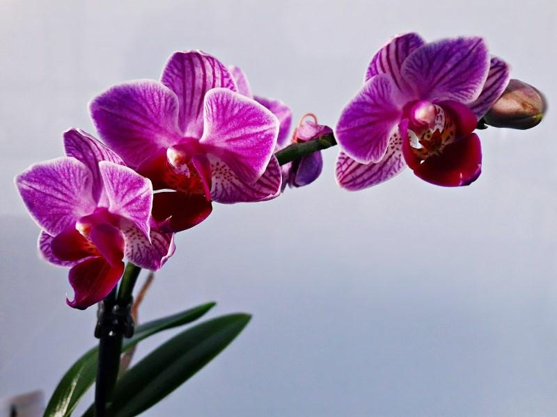 Orchidea | Otto piante che purificano l'aria e riducono l'inquinamento domestico
