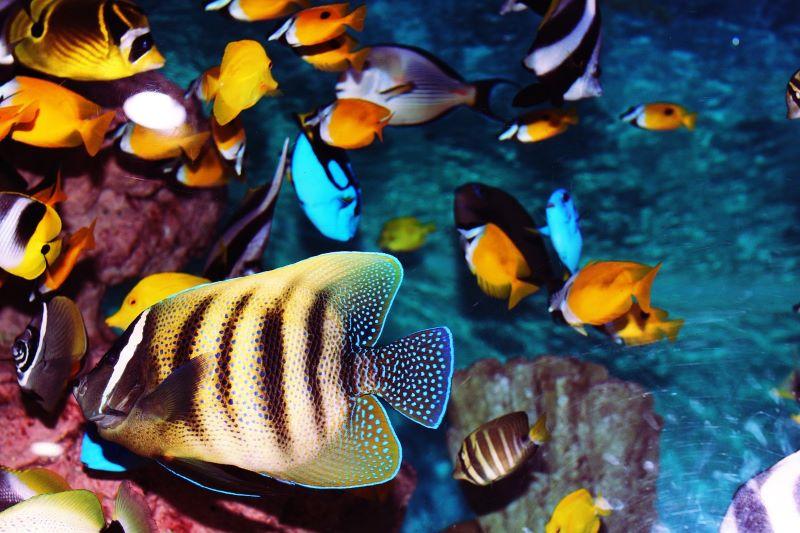 Nuove linee guida per il benessere degli animali acquatici