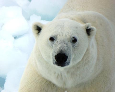 Giornata Mondiale dell'Orso Polare