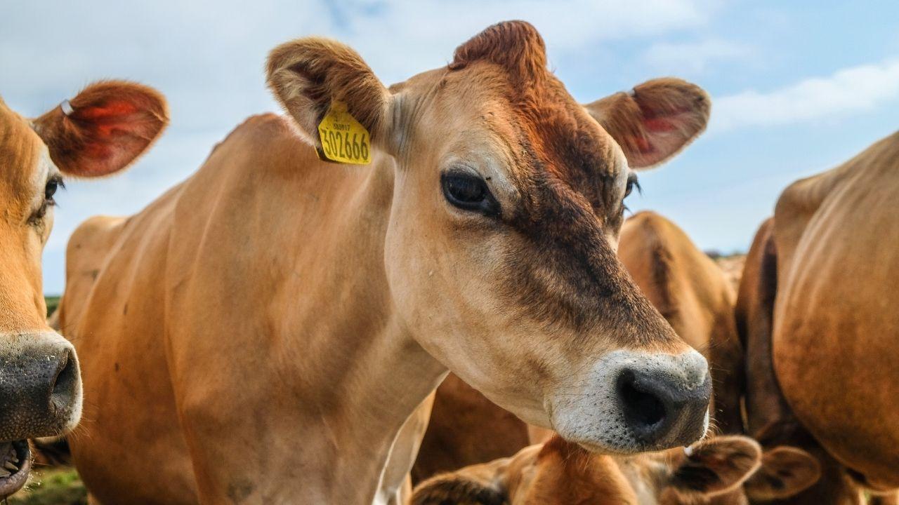 Benessere degli animali negli allevamenti