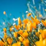 cambiamento climatico fiori