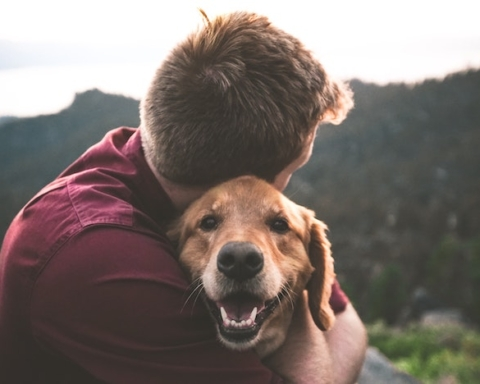 cani cancro alla prostata