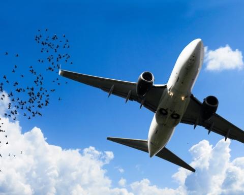 collisioni aeree con animali