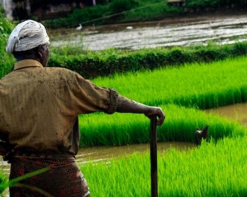 Giornata internazionale della lotta contadina