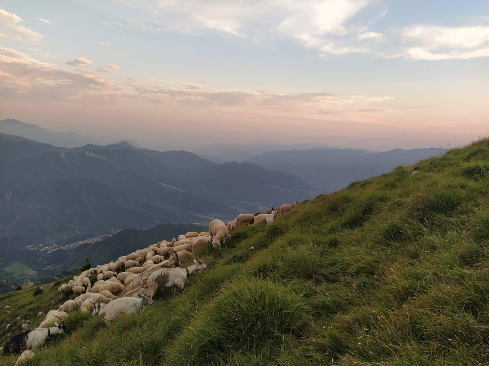 Progetto Pasturs
