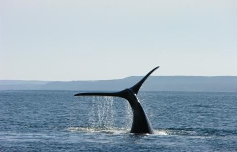 balene con il becco