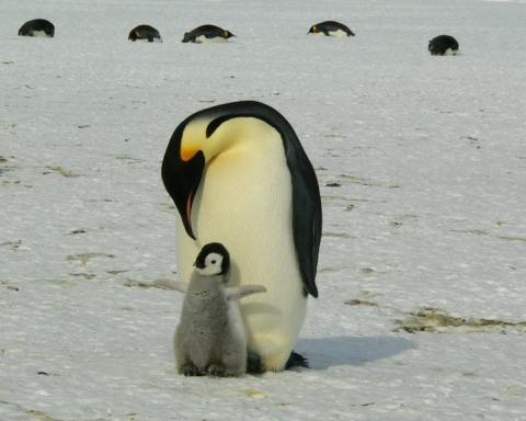 giornata mondiale del pinguino