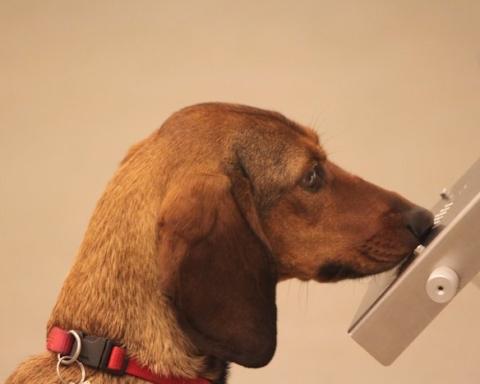 Cani anti-Covid