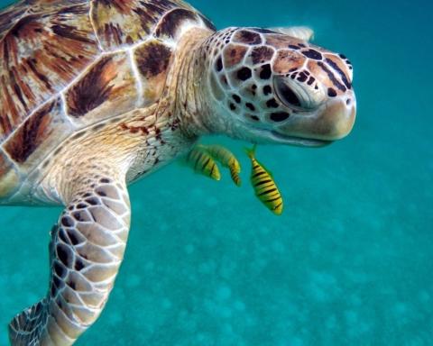 giornata mondiale delle tartarughe