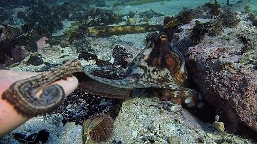 Il mio amico in fondo al mare
