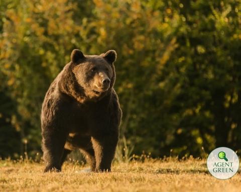 orso ucciso dal principe del liechtenstein