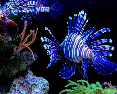 I pesci perderanno i colori