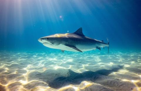 Stop allo spinnamento degli squali