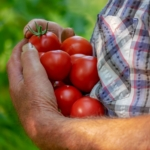 giornata della gastronomia sostenibile