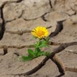 Giornata per la lotta alla Desertificazione e alla Siccità