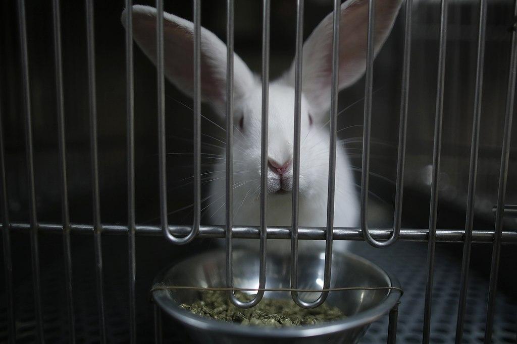 cosmetici testati animali