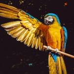 mutamenti morfologici animali e cambiamento climatico