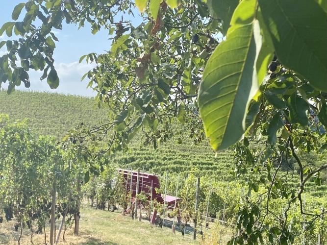 castellinaldo-panchina-vigne-667x500.jpg