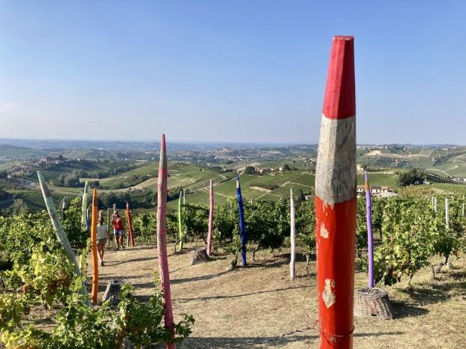 coazzolo-vigna-pastelli-giganti-667x500.jpg