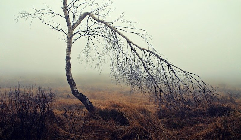 Life Drylands brughiera nebbia