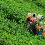 Giornata Mondiale delle Donne Rurali