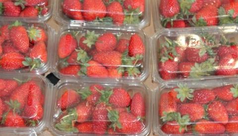 Spagna plastica per frutta e verdura