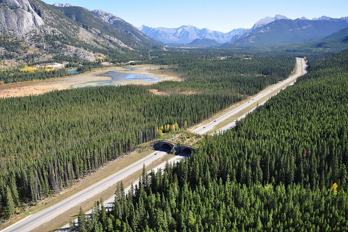 Parco Nazionale Banff, Canada (fonte http://phys.org/news/2014-02-wildlife-gene-banff.html)