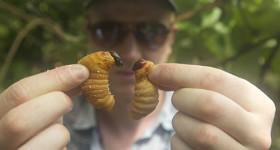 Bugs il documentario