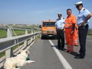 Cani-abbandonati-autostrada