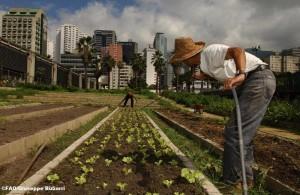 Diversi usi del suolo (foto: Giuseppe Bizzarri, fonte: FAO)