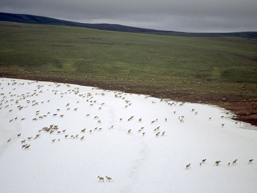 Tundra, fonte: http://environment.nationalgeographic.com/