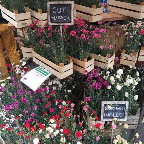 Flor cut flower
