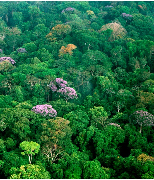Dal 1990 ad oggi sono andati perduti circa 129 milioni di ettari di foresta