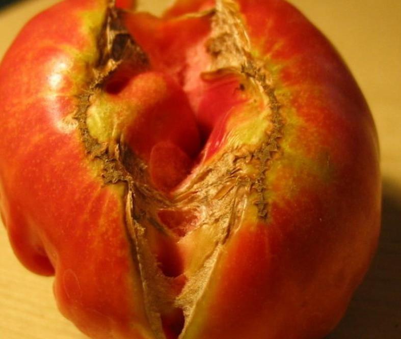 Pomodoro spaccato