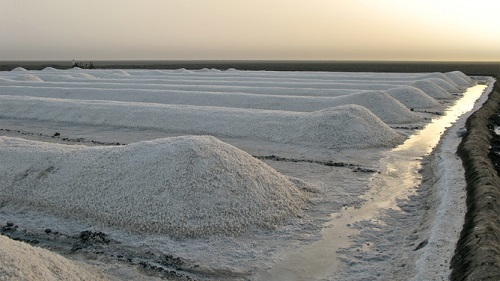 Il sale pià bianco del mondo, prodotto nel deserto di Thar