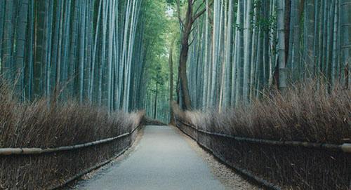 Planetary BambooForestKyoto_bassa