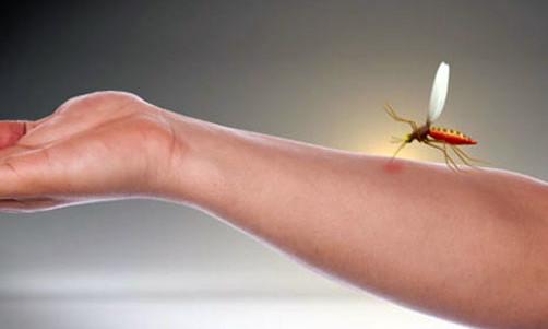Punture-delle-zanzare-rimedi-naturali