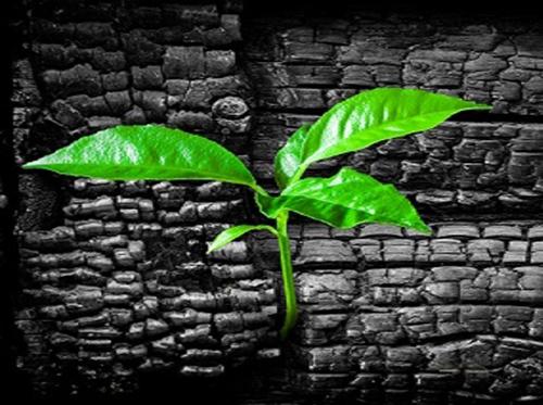 articolo agricoltura africa