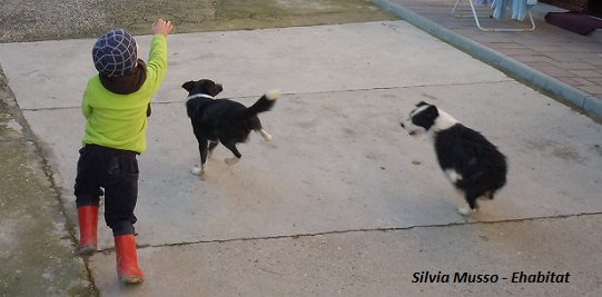 bimbo cani