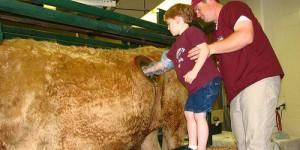 bimbo-mette-mano-nello-stomaco-della-mucca-500x250