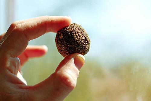 bombe di semi per la Giornata Internazionale della Pace
