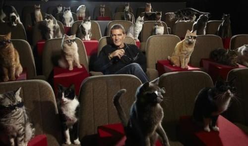 cani e gatti al cinema